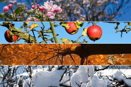 Venez découvrir la magie des saisons de l'année en français !