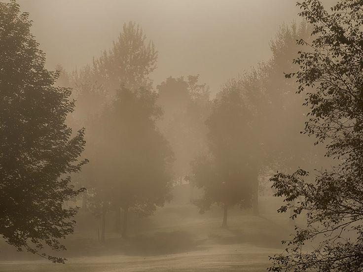 Natur - Nebel