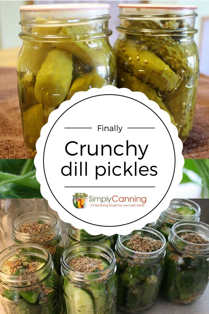 Easy Dill Pickle Recipe - Finally! I'm getting crunchy dills.