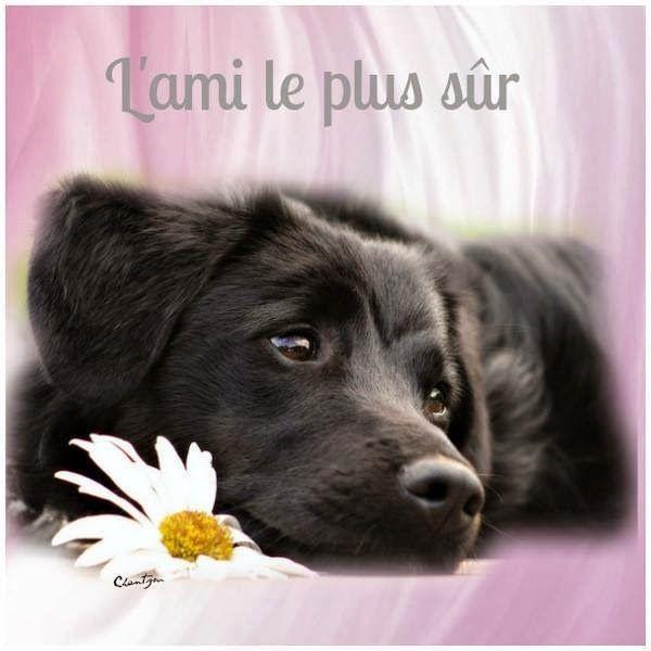 Citations option bonheur: Citation sur l'amour et la fidélité des animaux