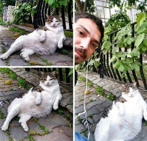 Στην Κωνσταντινούπολη έστησαν άγαλμα για τον διάσημο γάτο Tombili στο αγαπημένο του σημείο