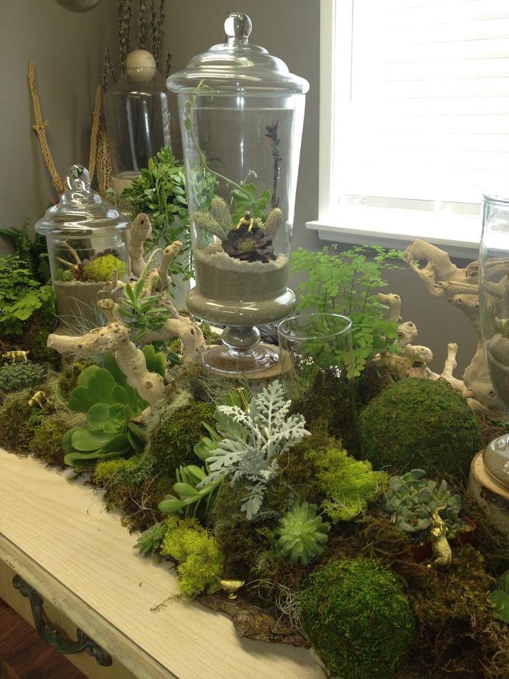 Apothecary Jars Succulents Moss Fern Drift Wood Www
