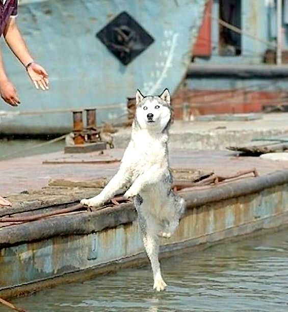 Best Perfectly Timed Photos We Love Images On Pinterest - Photographer proves dogs can fly with funny perfectly timed photos