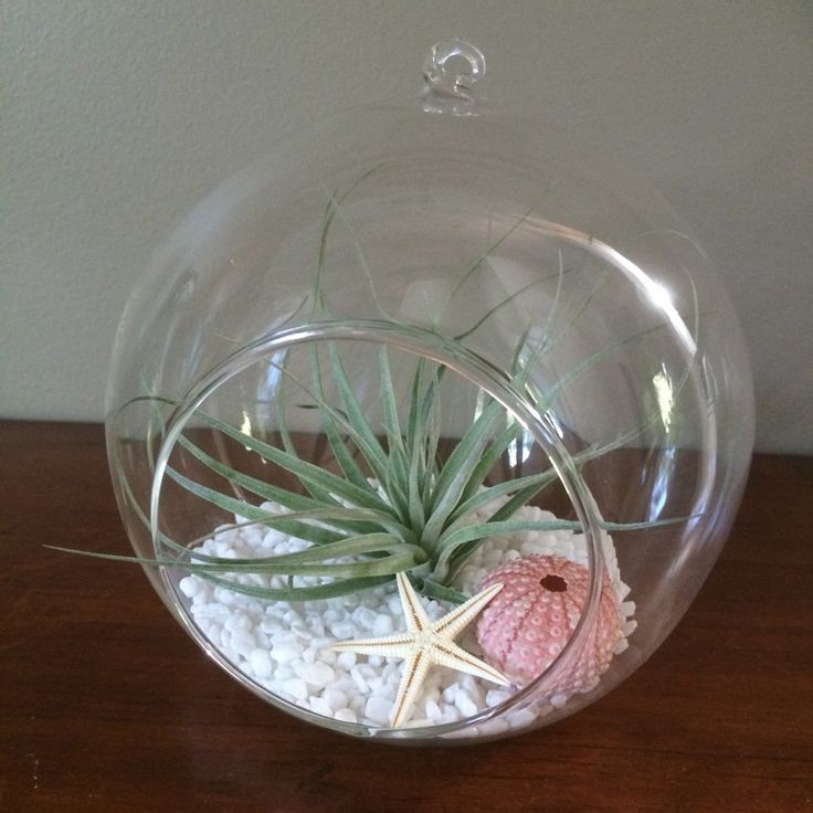 Large Hanging Glass Garden with Cotton Candy #airplants #hanginggarden #airplantdesigns