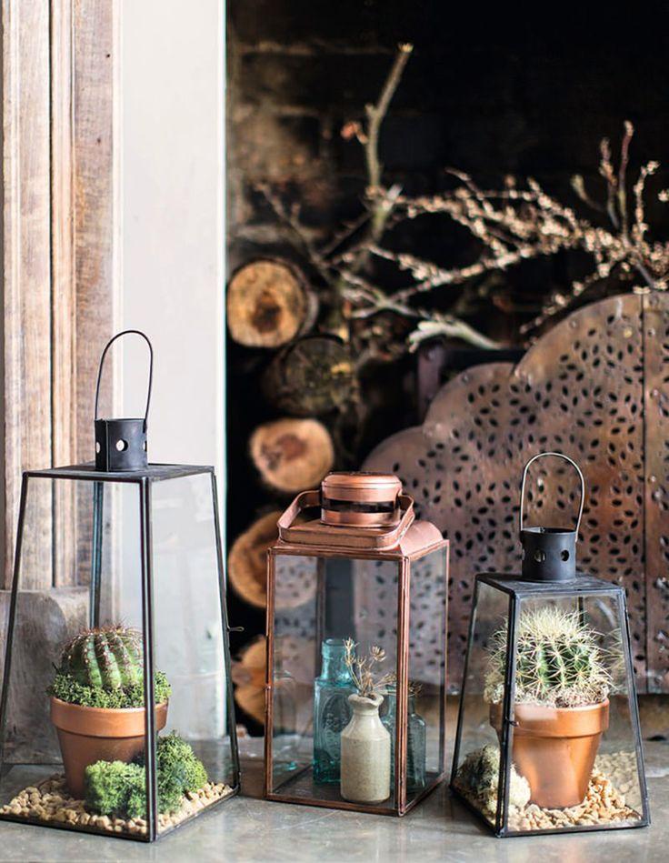 3 plantas perfeitas para quem não tem muito tempo para cuidar da casa - limaonagua