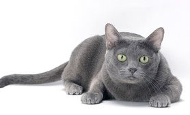 Four Places to Pet Your Cat — and One to Leave Alone #cats #DrMartyBecker
