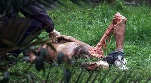 Gross Pictures: Grizzly Bear Victim