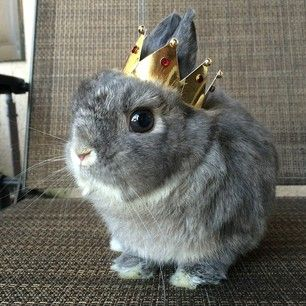 Your bun knows she is the highest form of royalty and expects you to treat her such. | 19 Things Every Bunny Lover Understands