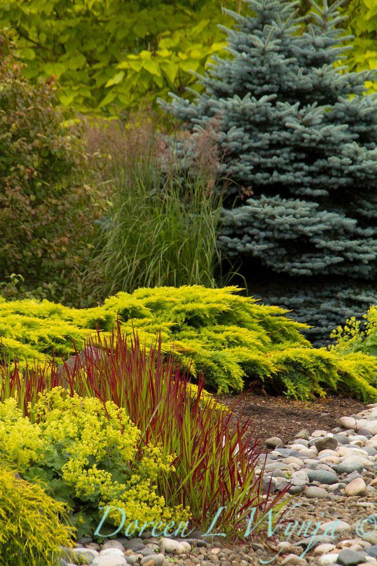 Ornamental Grasses Kenya : Best ideas about evergreen garden on trees