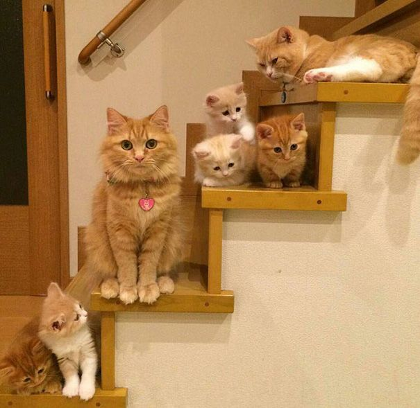 20 Proud Cat Mommies With Their Kittens-4