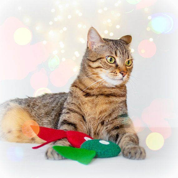 2 Catnip Toys Christmas Cat Toys Cat Toys Catnip Fish Green Red Tropical Fish Valerian Optio Christmas Cats Cat Toys Catnip Toys