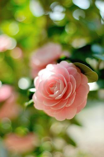 Flowers are brilliant~