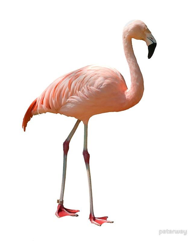 falmingo: Flaming Flamingos, Art Inspiration, Caribbean Art, Nursery Art, Fabulous Flamingos, Beautiful Birds, Children Art, Flamingo Power
