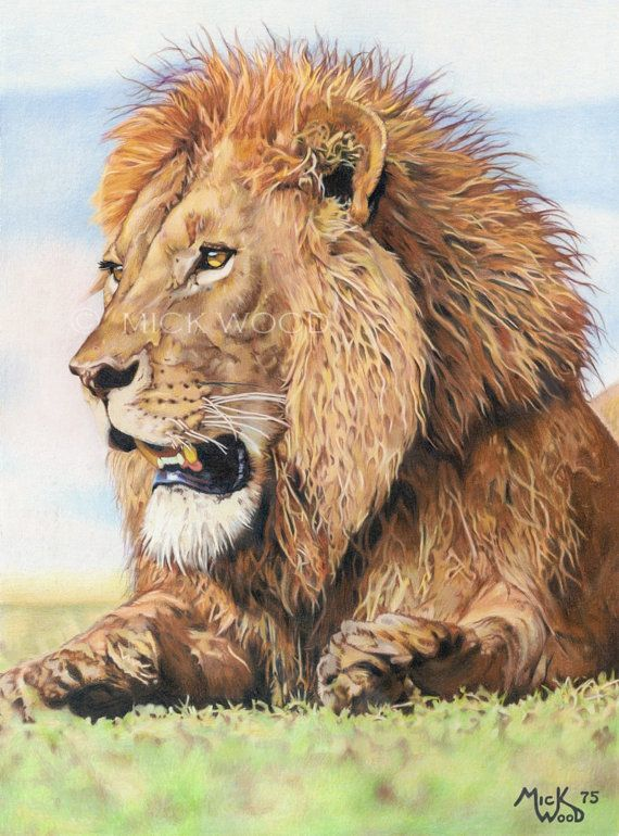 The Lion- print of original colored pencil drawing by Mick ...