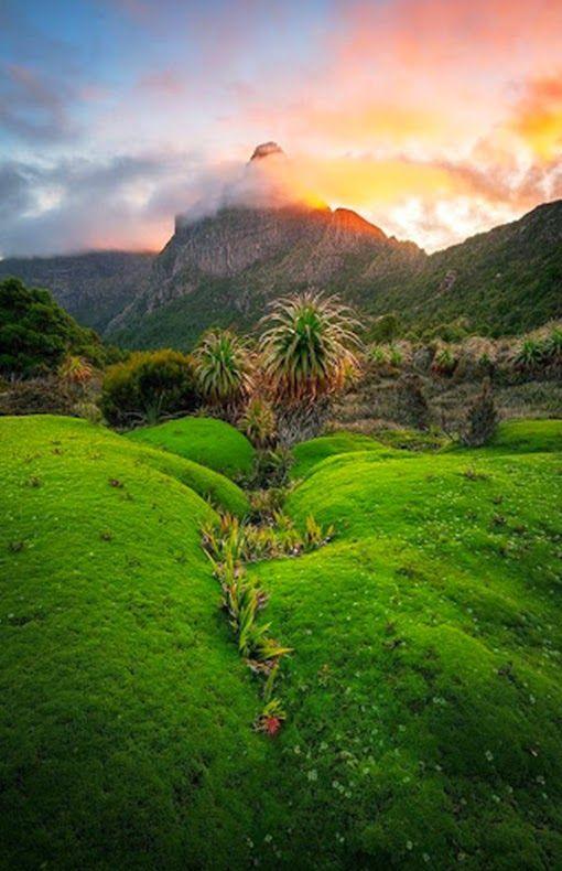 South-West National Park, Tasmania.