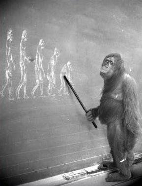 Théorie de l'évolution : Science ou Croyance ? (Docu) [VF] - OPEN YOUR EYES