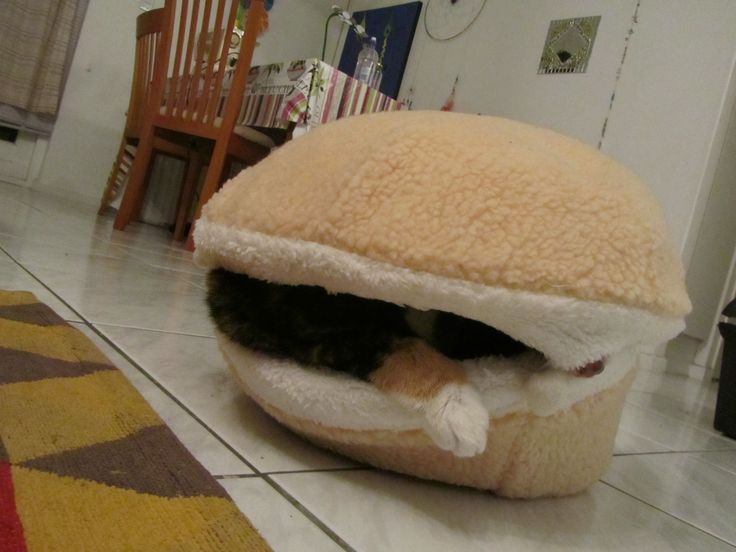 Cat burger 8