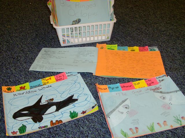 Foldable Note-taking Organizer-Students gather data about Sea Animals using the tabs: Habitat, Physical, Behavior, Diet, Life Cycle, Interesting Facts