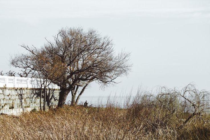 El árbol de la plata     #riodelaplata #uruguay #desaturated #canon750d #moodygrams #vsco