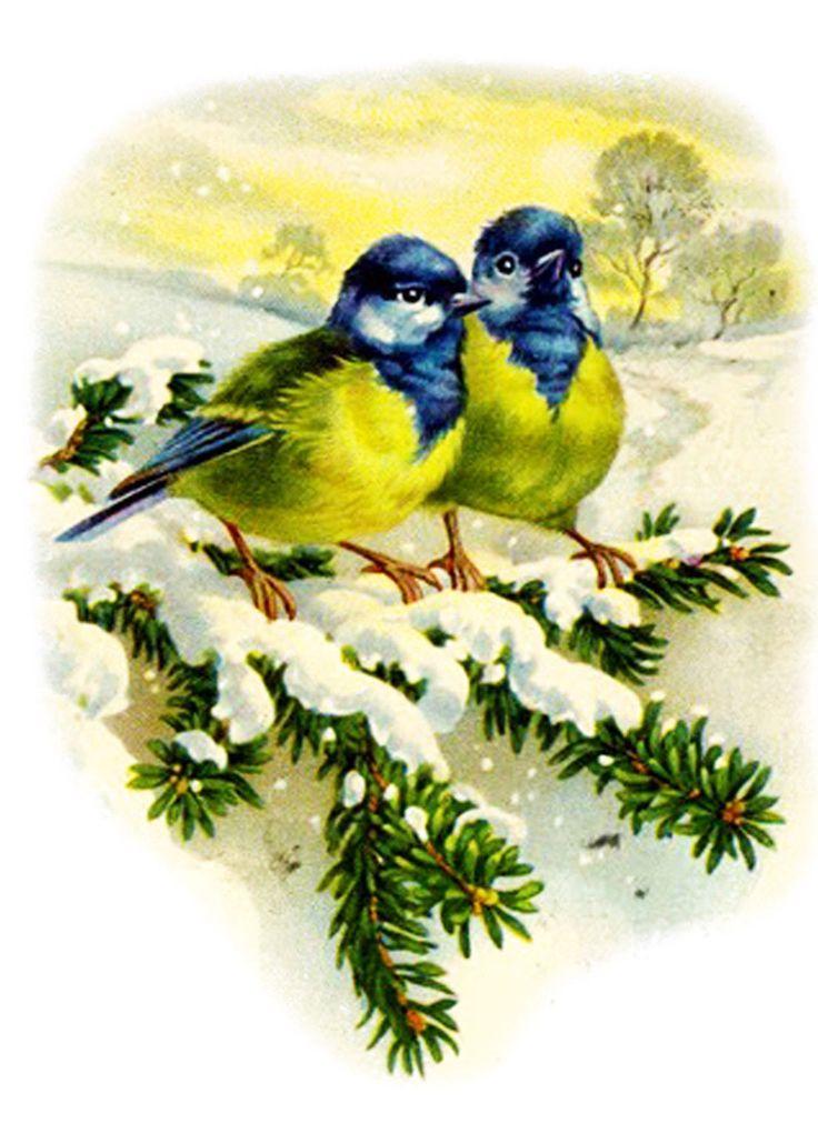 Новогодние птички открытки, днем