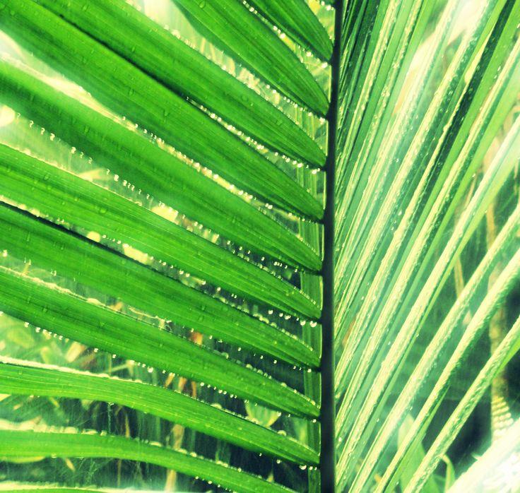 tropical leaf printable