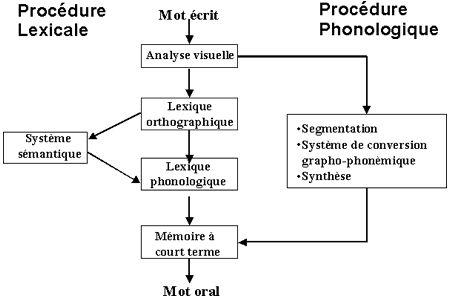 Université d'automne « La dyslexie à l'École » - Lecture de mots et dyslexie: approche cognitive - Éduscol
