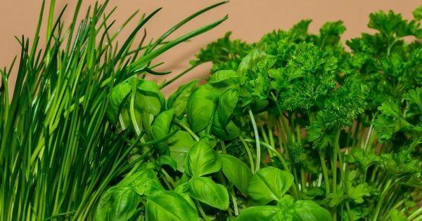 Frische Küchenkräuter sind aromatischer, gesunder und preiswerter als getrocknet oder tiefgefroren aus dem Supermarkt. So baust du Kräuter in der Küche an!