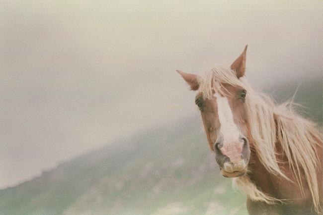 Inkvision: Photobomb, Horses, Beautiful,  Ibizan Podenco, Cabaleiro Prints, Ana Cabaleiro, Photo Bombs, Wild Hors, Animal