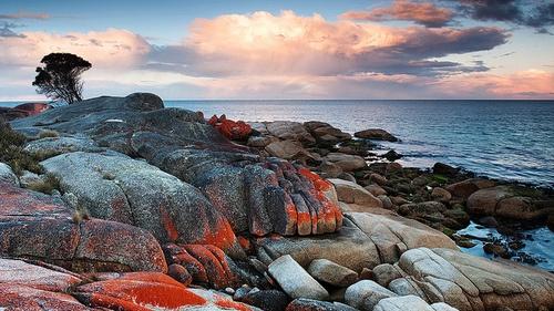 Bay of Fires - tasmania | Tumblr: Nancy Napoleon, Home I Adorable, Islands Home I, Tasmanian Islands