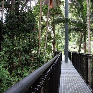 The Tamborine Rainforest Skywalk is thirty metres above Cedar Creek, giving visitors a phenomenal view of the rainforest canopy and surrounding scenery.