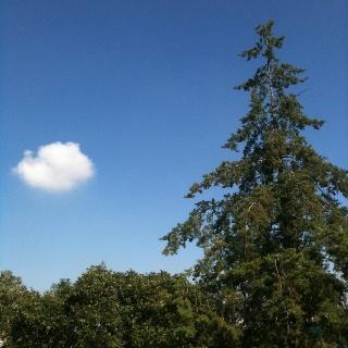 Cielo visto desde el Ajusco