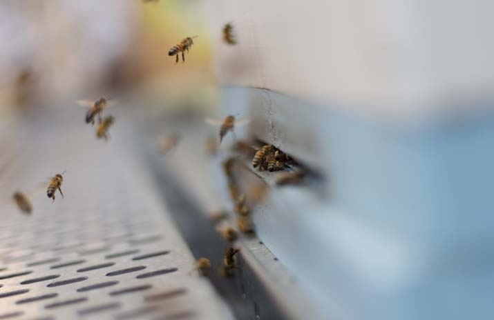 Photo: Justin Emerson  CBD - Melbourne - Trunk, Exhibition St Rooftop Honey - COFFEE SUPREME