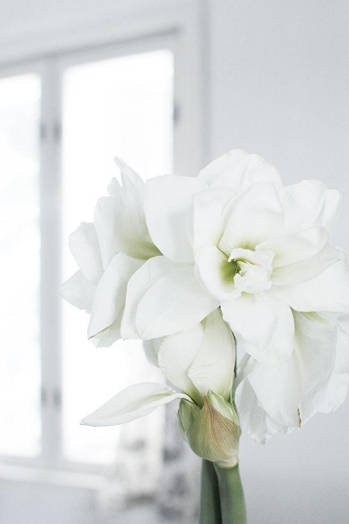 Varpunen white