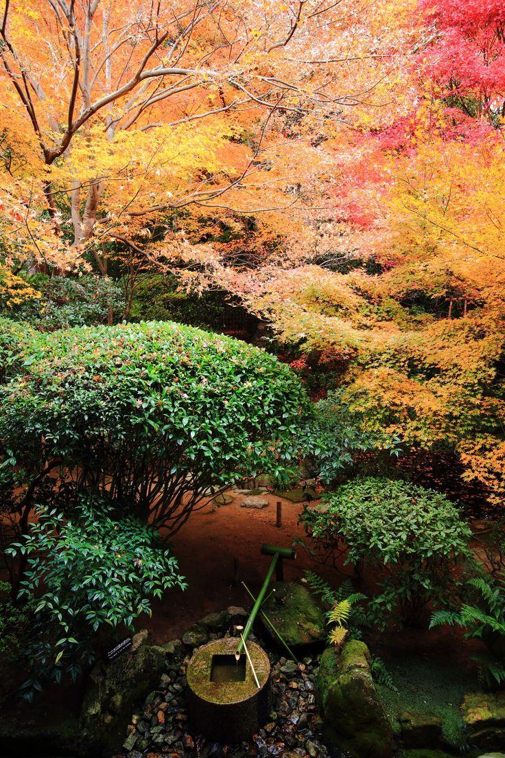 淡い紅葉の下に佇む風情あるつくばい