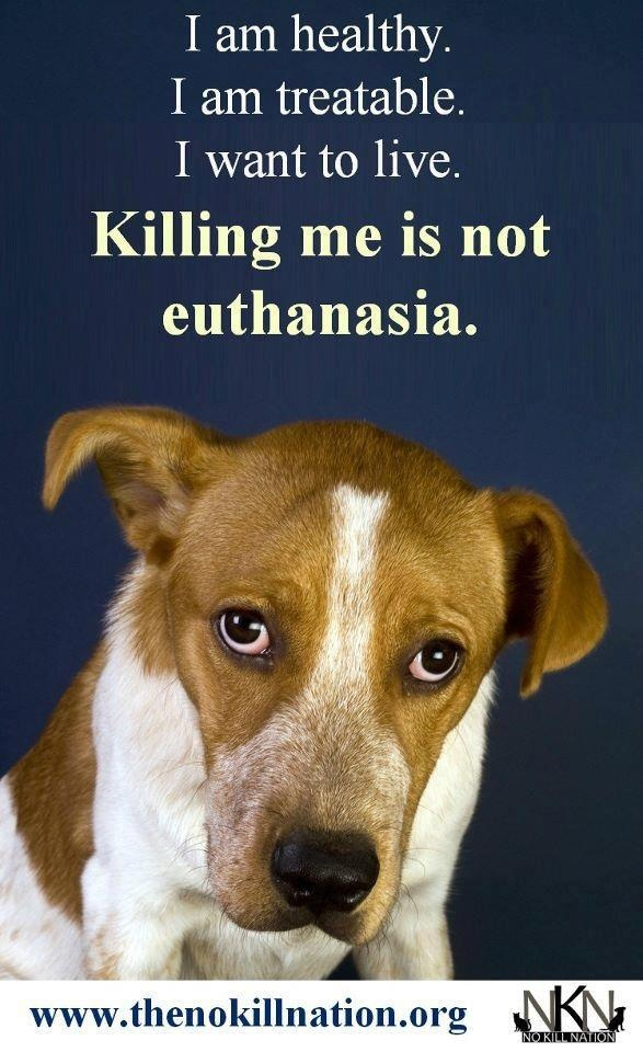 """illegalize euthanizing animals to relieve shelter No kill vs traditional shelters no kill rescue: a """"no-kill"""" rescue is an animal shelter that does not kill healthy or treatable animals even when the shelter is full, reserving euthanasia for terminally ill animals or those considered dangerous to public safety."""