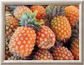 Pineapples, Sunshine Coast, Queensland, Australia Photographic Print by David Wall - AllPosters.co.uk