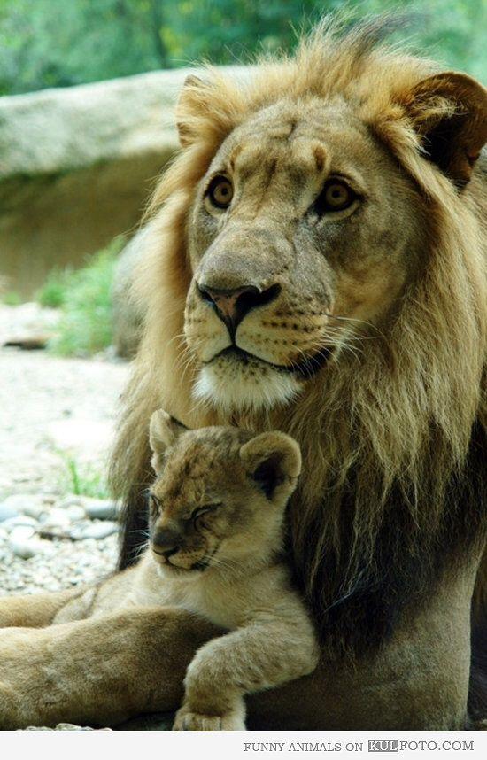 I call Emmett my little cub :)