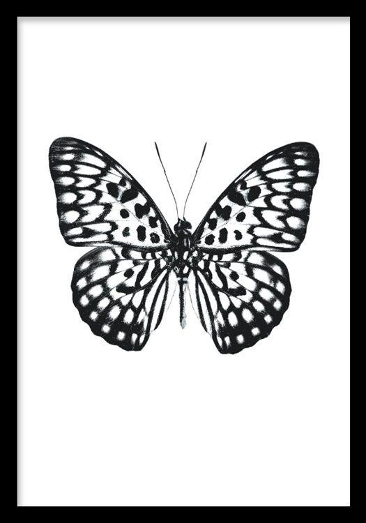 Poster med svartvit fjäril på vit bakgrund. Desenio.