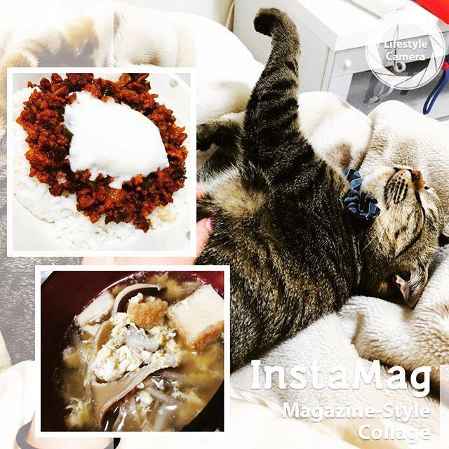 昨日に引き続きお料理🍳 風邪ひいたから生姜入り野菜スープだよん💓〜ぴっぴを添えて〜 ※風邪のわりにがっつり(笑)  #料理#おうちごはん#ハンバーグライス#野菜スープ#生姜入り#風邪ごはん#愛猫#ぴっぴ#ねこすたぐらむ#リラックス#cook#hamberg#rice#soup#cat#pet