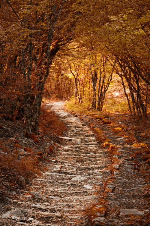 Autumn Scenery with a winding road for extra iterest