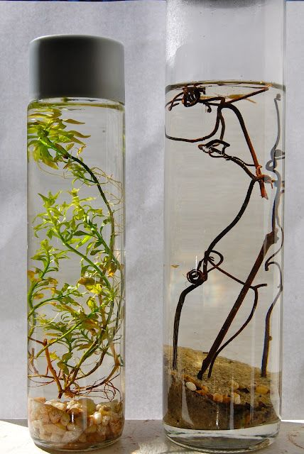 Ecojar - An entire aquarium ecosystem encapsulated in glass. A fun project for the kids and adults too.