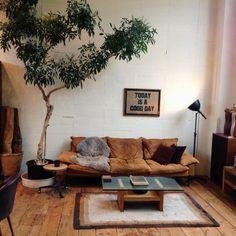 bildergalerie schöne zimmerpflanzen wohnzimmer einrichten zimmerbaum
