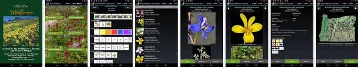 Oregon Wildflowers App – It provides images, species descriptions, and technical descriptions for more than 940 common wildflowers !