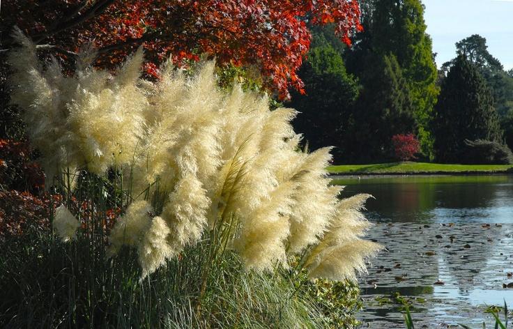143 best gardening grasses and grass like plants images. Black Bedroom Furniture Sets. Home Design Ideas
