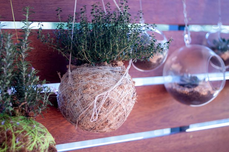 Sprinkle fresh herbs straight onto your BBQ steak with these hanging plants form Masters.