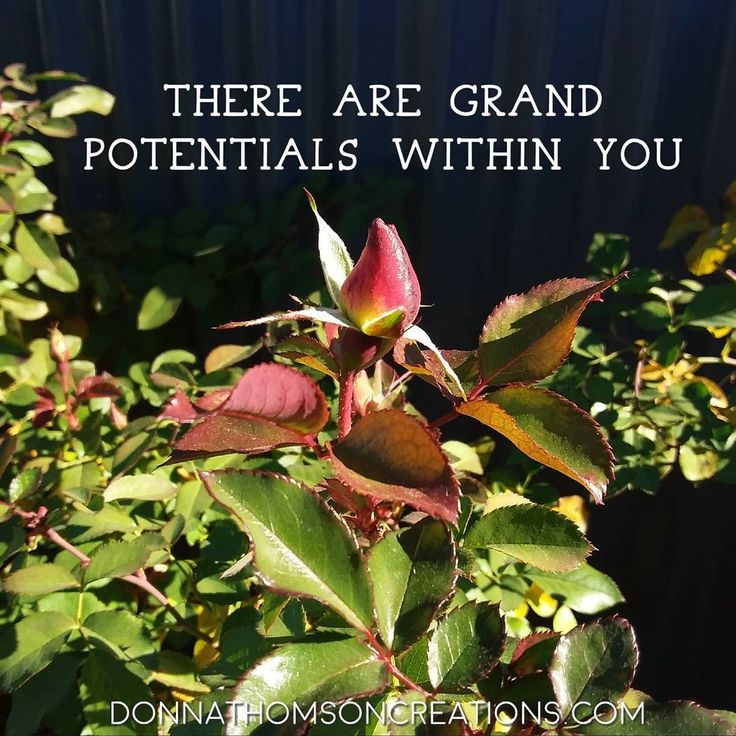 There are grand potentials within you. The beauty and sweet scent of the rose is just waiting to unfold.