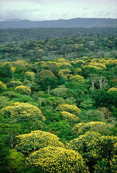 European and African countries launch plan to protect tropical rainforest in the Congo