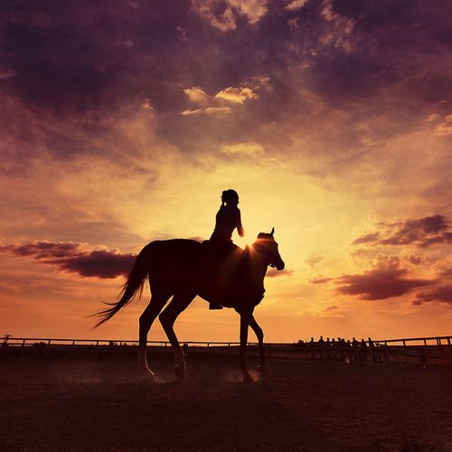 I can't wait to be able to have a horse to ride.. one day.