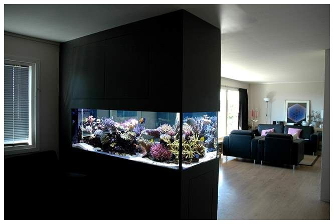 reef tank of the month 2007 july reef aquariums pinterest reef tanks saltwater tank and. Black Bedroom Furniture Sets. Home Design Ideas