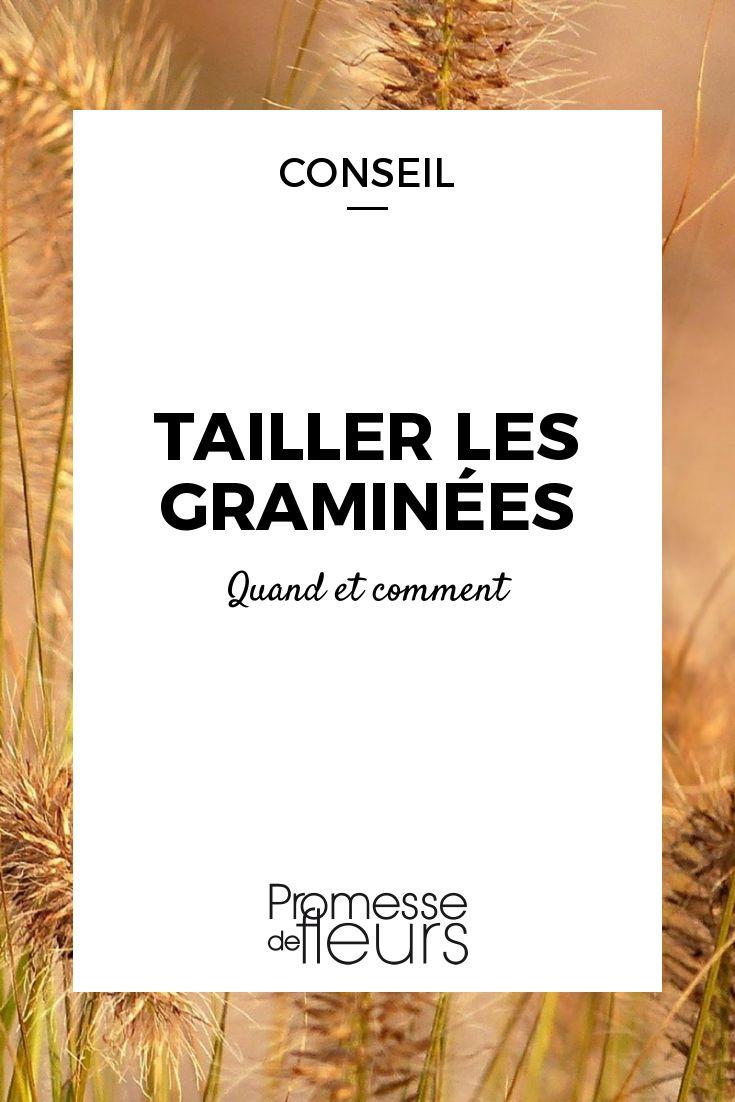 les 484 meilleures images du tableau arbustes et fleurs ForQuand Tailler Les Graminees